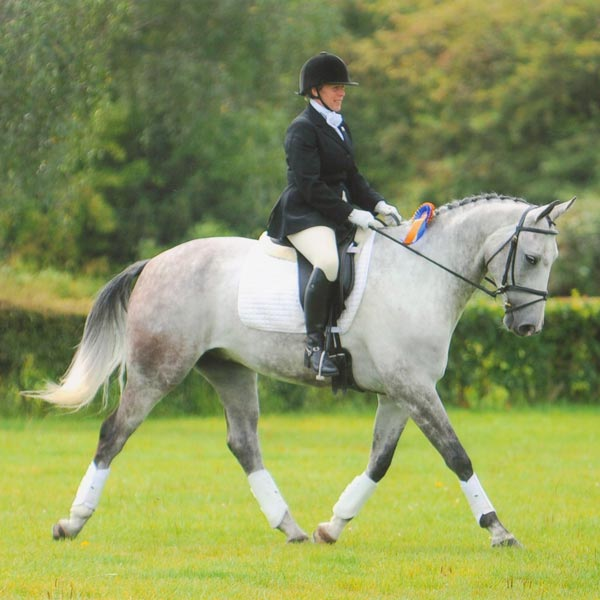 Dressage to Music with Tessa and Titan